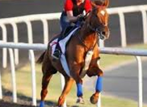 Records shattered at Dubai World Cup as Animal Kingdom wins!